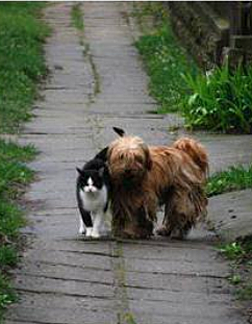 5Dog-wait-for-friend-cat