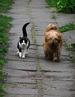 6Dog-wait-for-friend-cat